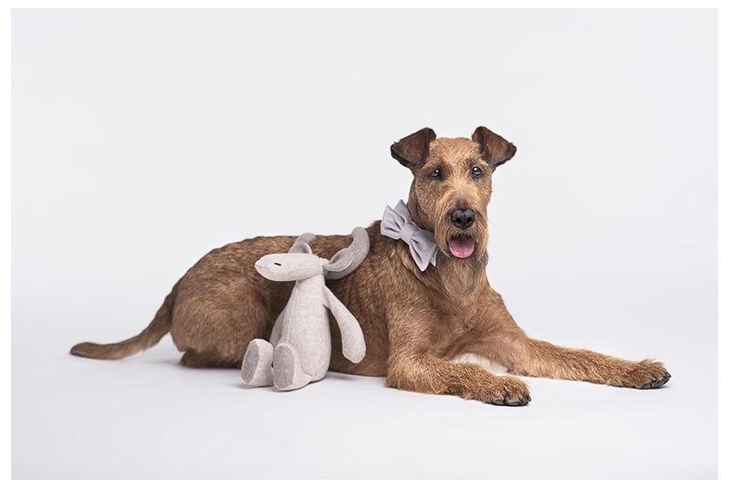 Mucha dla psa lub kota SOFIA