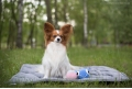 DREAMY dog or cat travel mat - grey