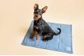 HAMPTONS dog or cat travel mat - sky blue