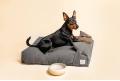 HAMPTONS dog cushion - sky blue