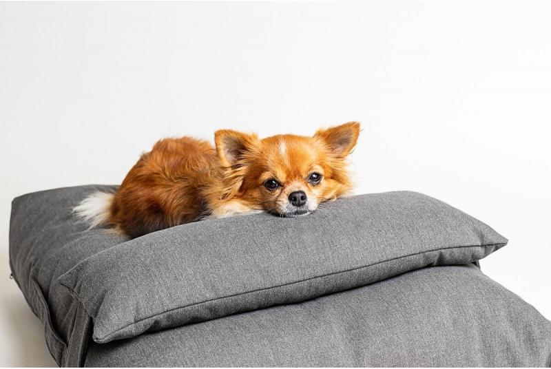 HAMPTONS legowisko poducha dla psa - brown