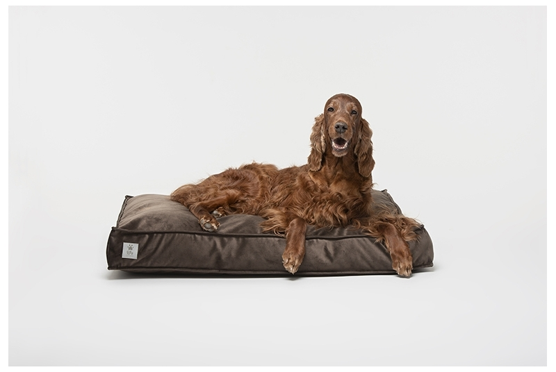 dog cushion COSY chocolate brown