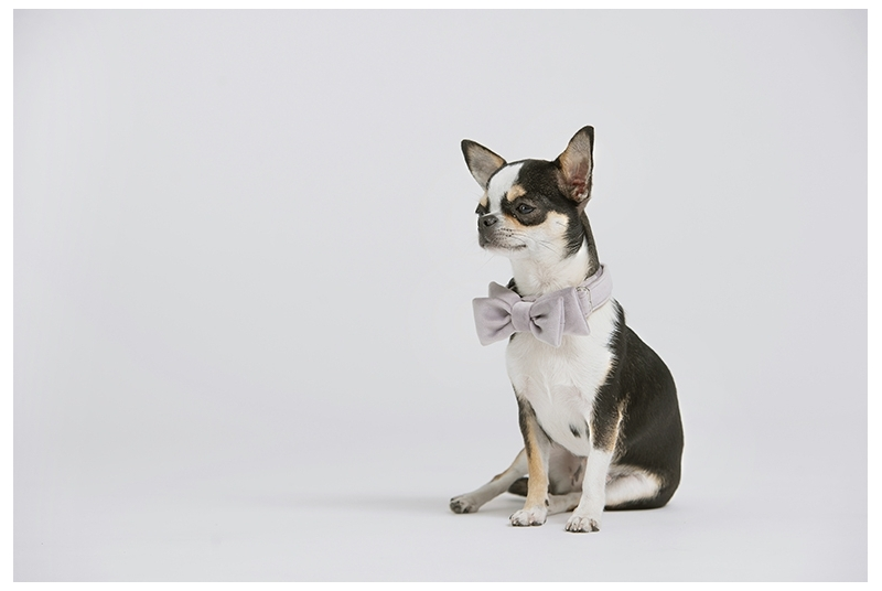 Pet bow tie SOFIA orchid hush