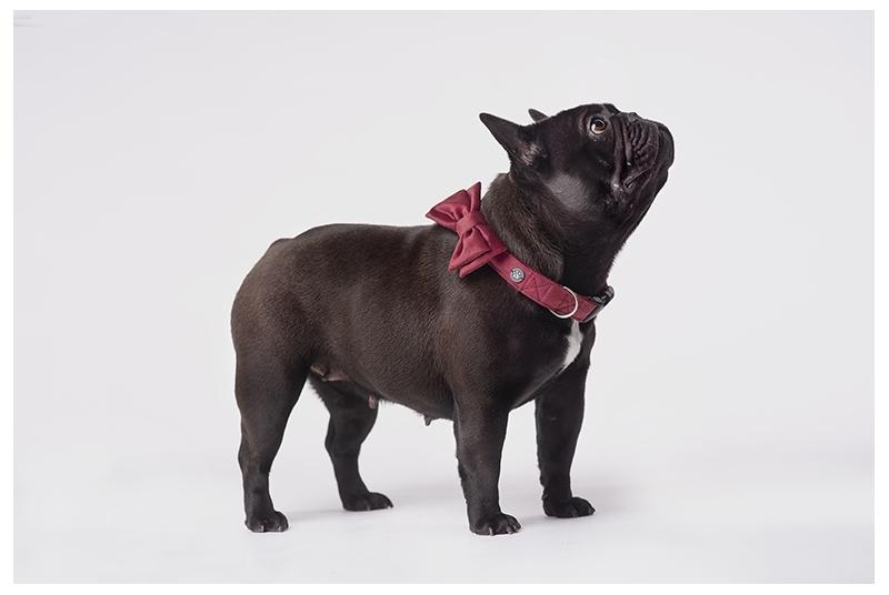 Świąteczna mucha dla psa lub kota HOLLY