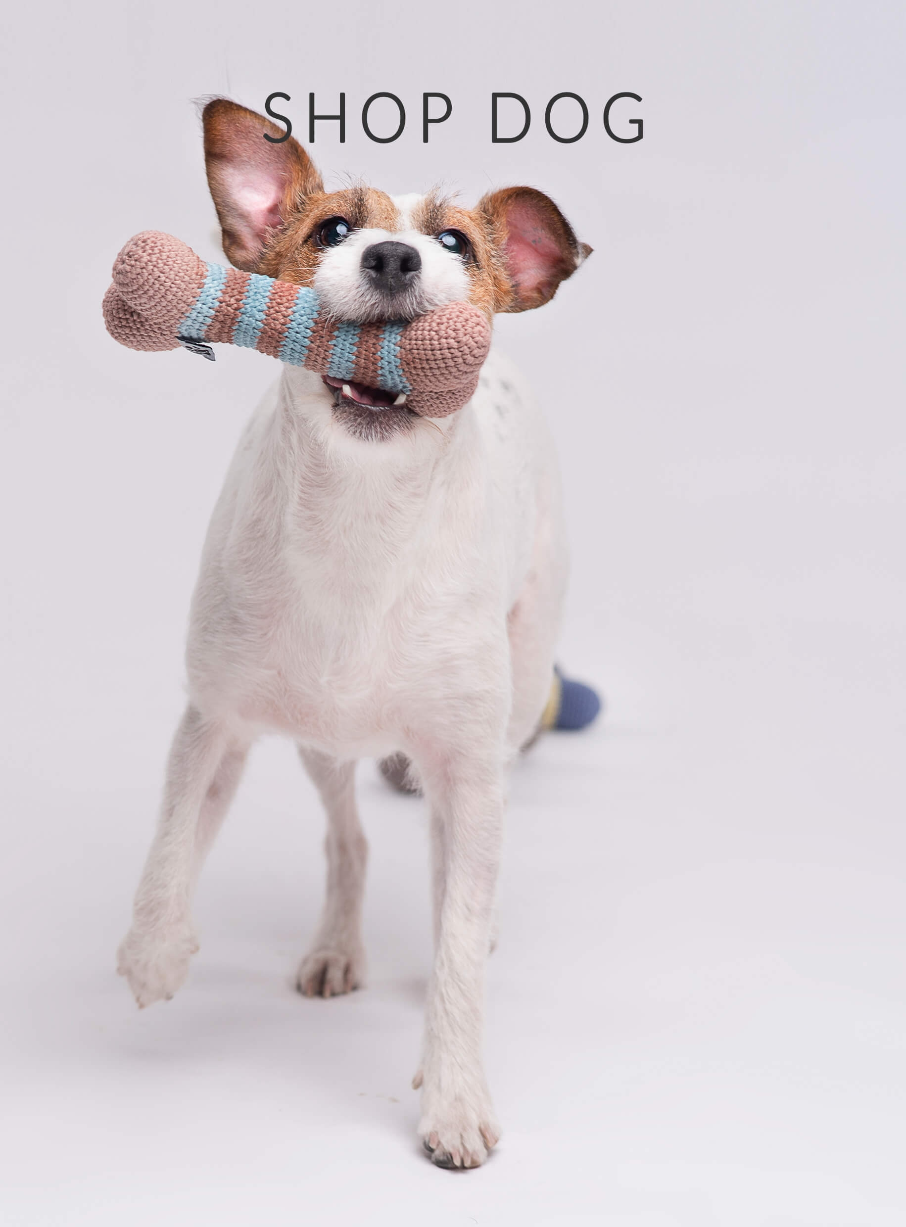 Shop for dog accessories