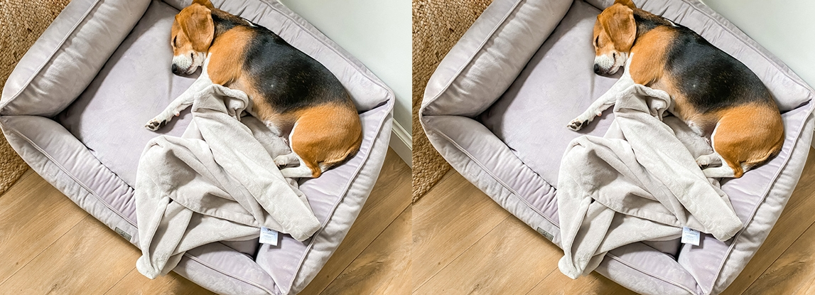 Dog blanket - how to keep your pup warm and cosy