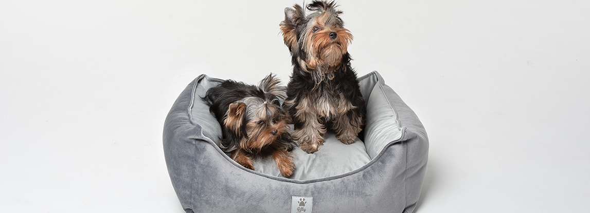 How to prepare for a new puppy at home - tips and checklist