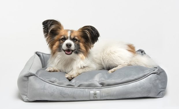 Buy a pet bed and help dogs in need