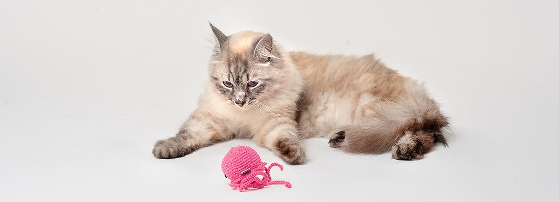Catnip cat toys