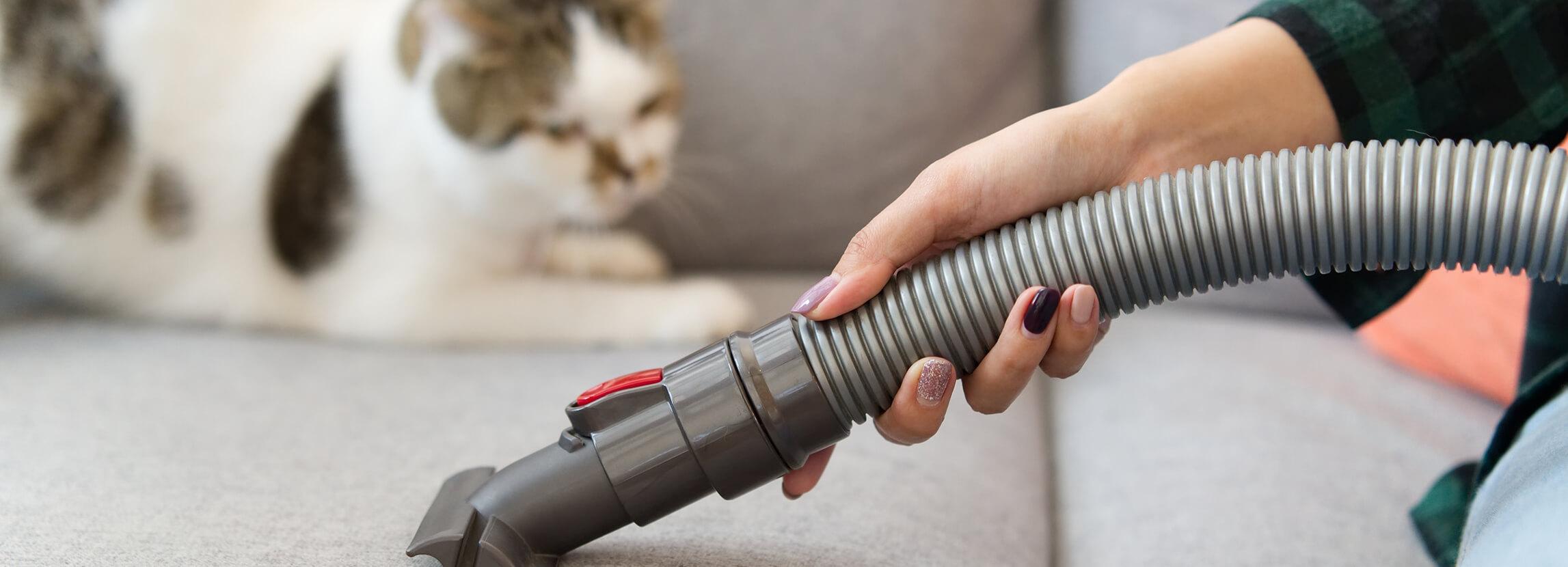 Kot w domu - jak dbać o czystość mając kota?