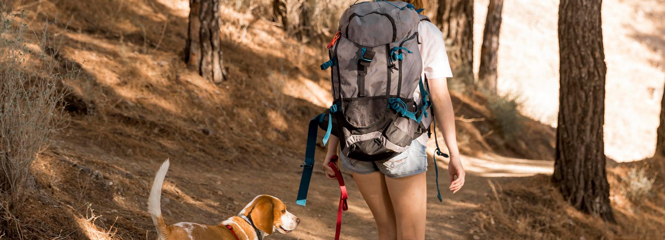 Spacer z psem - niezbędnik psiego spacerowicza