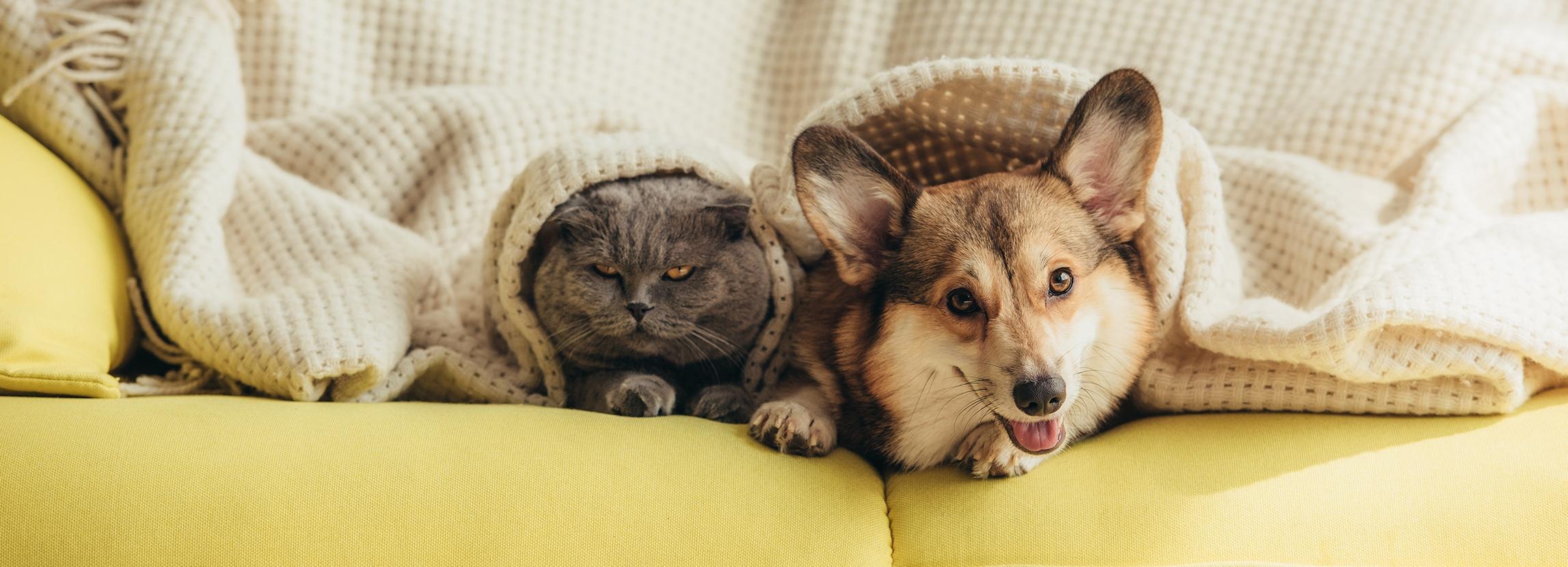 Alergie u psów i kotów - poznaj przyczyny, rodzaje i objawy
