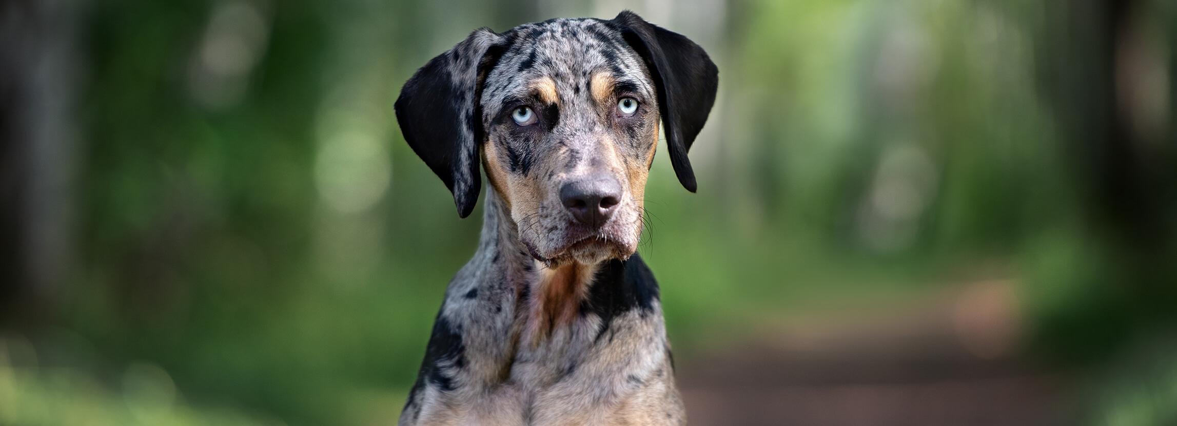 Najrzadsze rasy psów na świecie