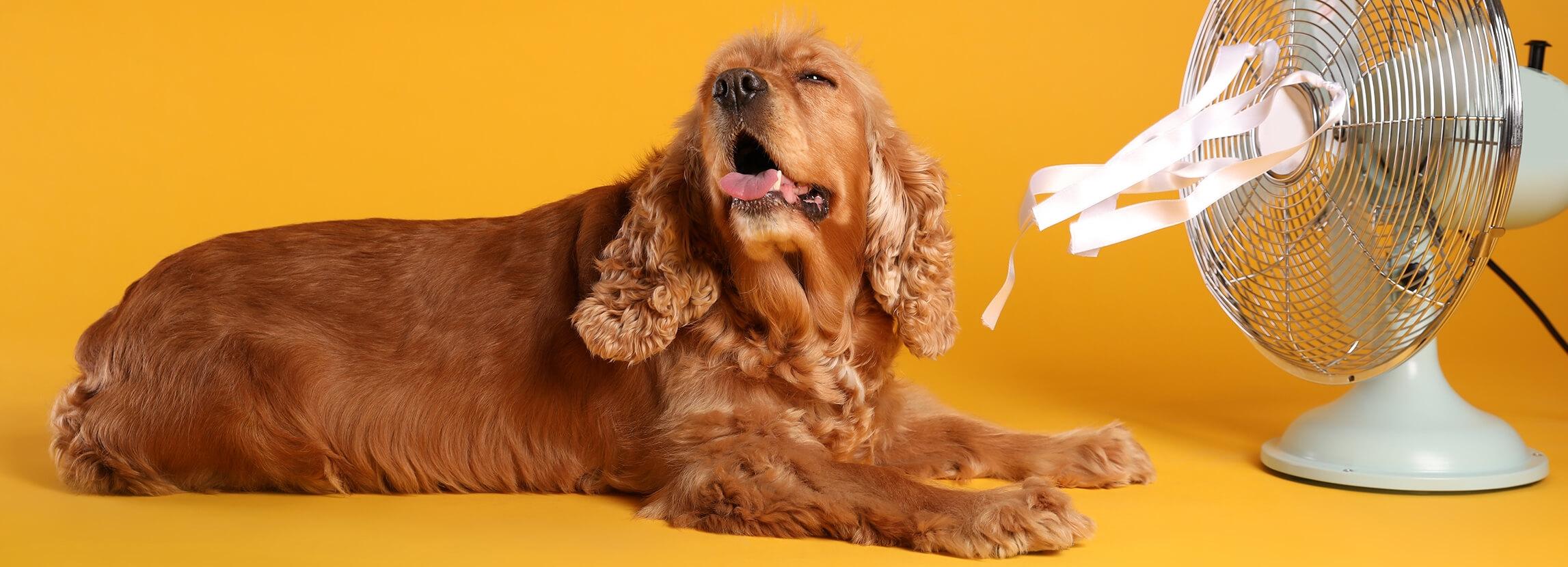 Jak pomóc psu przetrwać upalne dni?