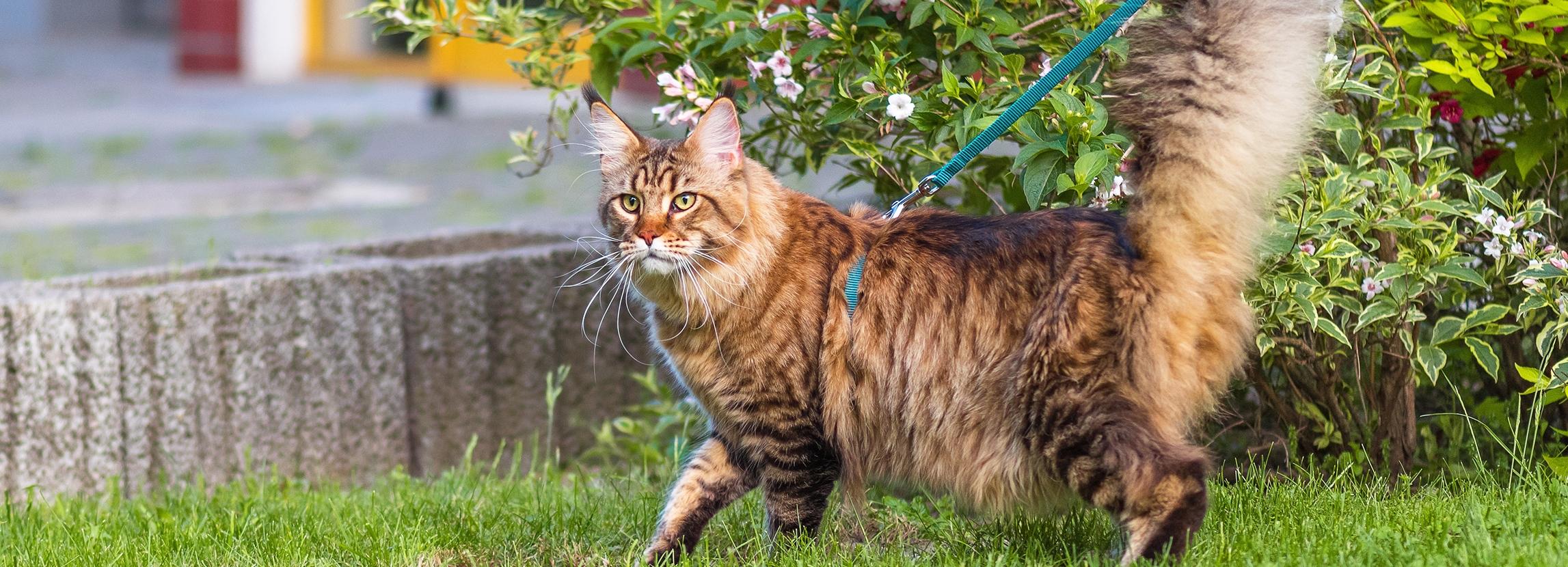 Spacer z kotem - o czym trzeba pamiętać