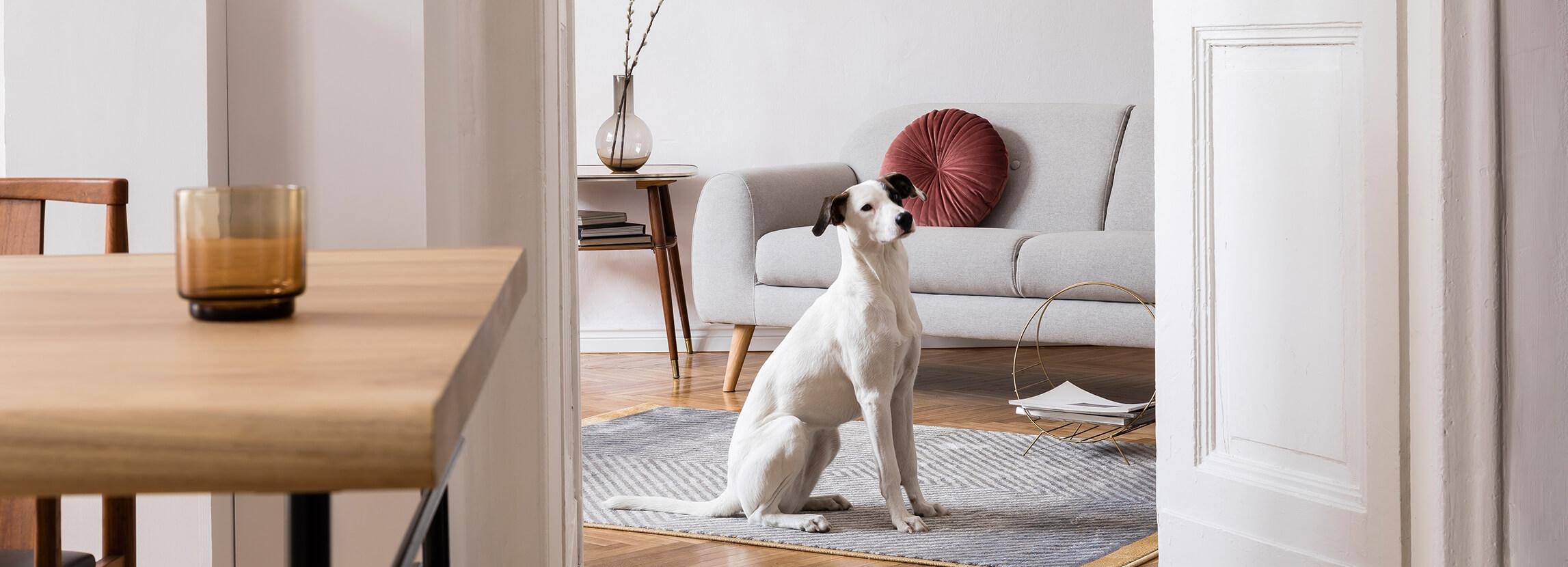 Dom tymczasowy dla psa i kota
