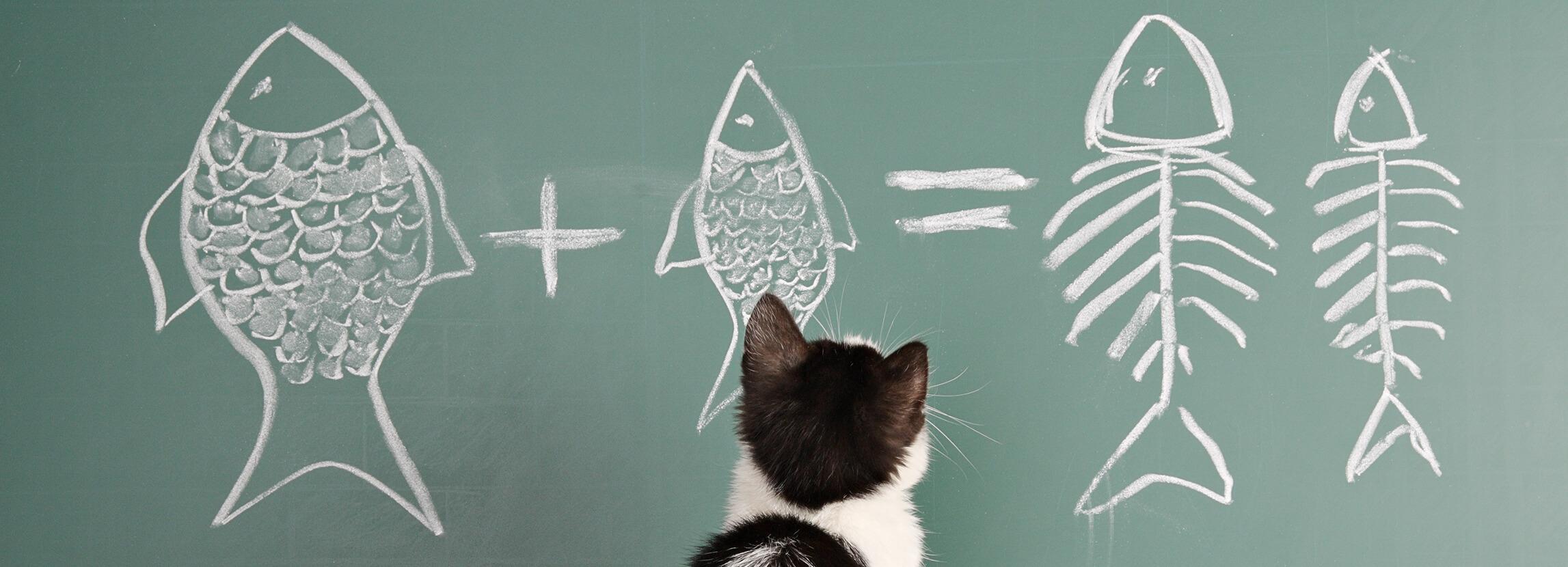 Tresura kota. Przydatne wskazówki.