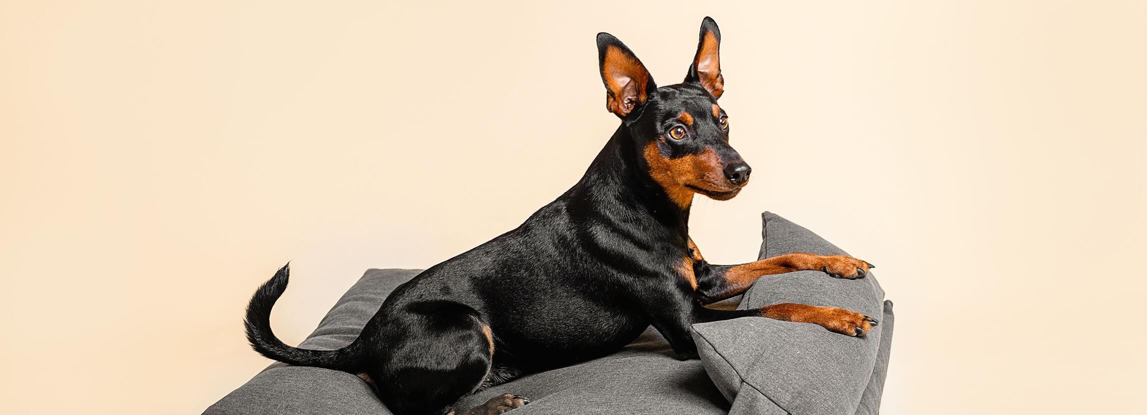 Jakie legowisko dla psa wybrać?