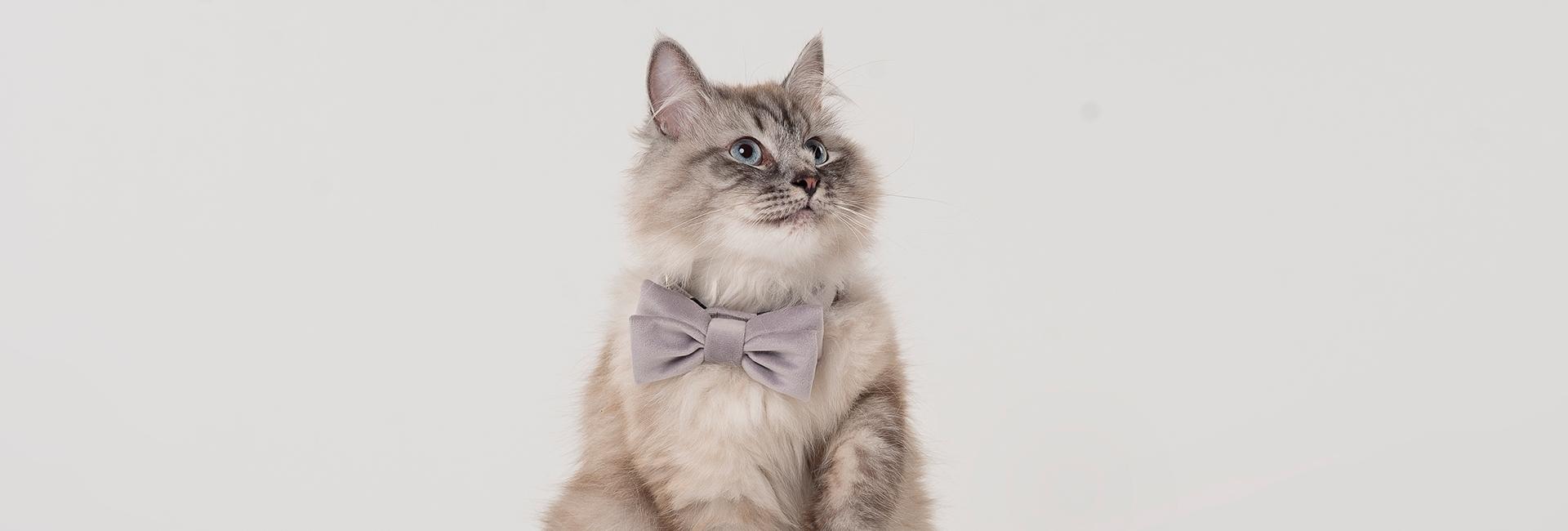 Mucha dla kota