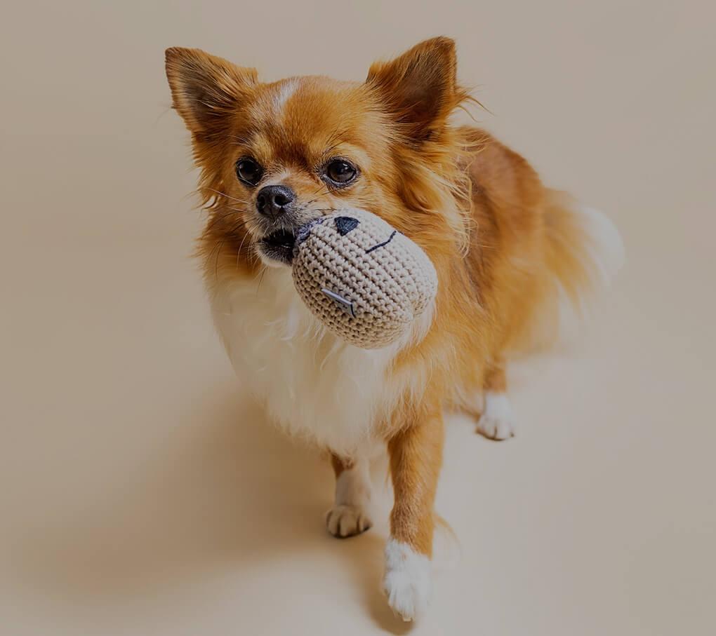 Limitowana edycja halloween zabawek dla psów i kotów