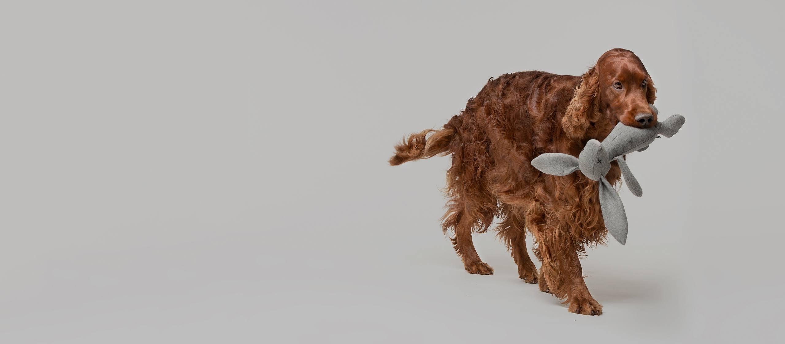 Ręcznie robione akcesoria dla psów i kotów